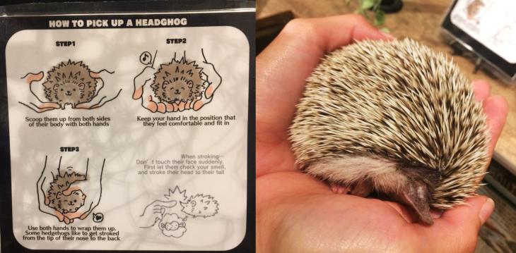 Harry Hedgehog Cafe, Tokyo, Japan