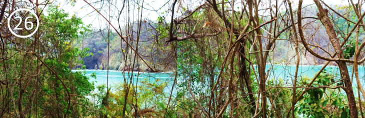 point 26 tortuga island eco trail