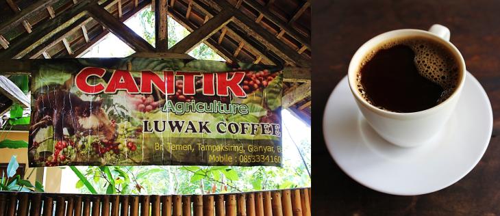 Luwak Plantation Sign.png