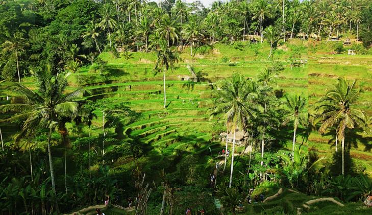 Tegalalang Rice Terrace.png