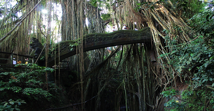 Ubud Monkey Forest Bridge