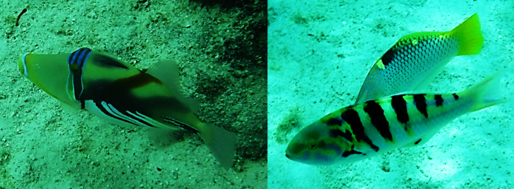 our favorite fish in moorea