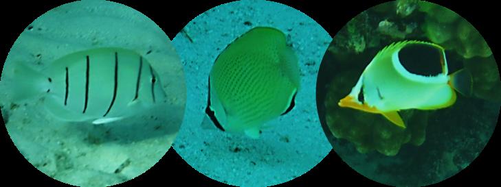 bora bora fish