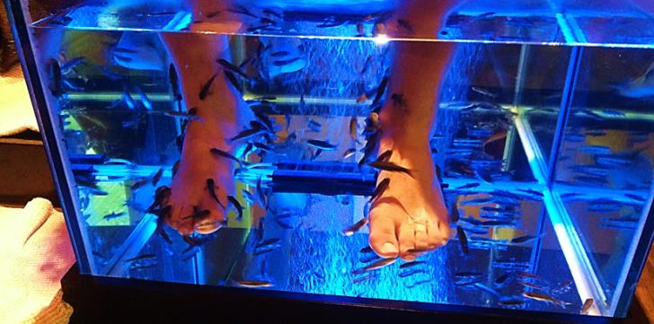 feet fish spa