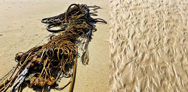 seaweed oregon