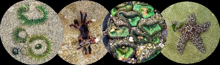 oregon ocean life